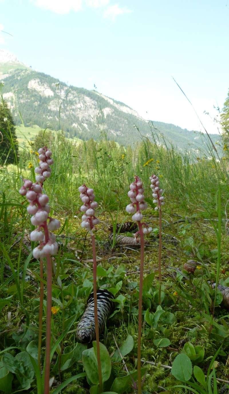 Du 13 au 19 juillet dans le Val di Fassa P1500210