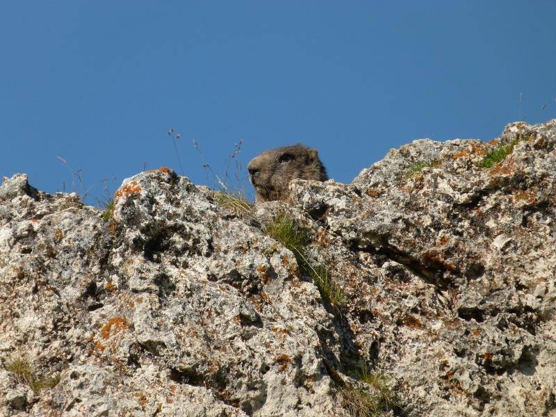 Du 13 au 19 juillet dans le Val di Fassa P1500411