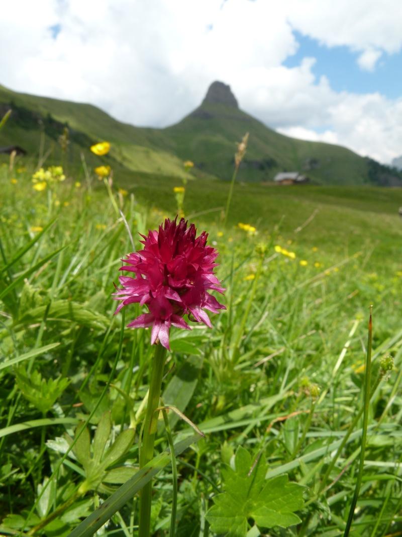 Du 13 au 19 juillet dans le Val di Fassa - Page 2 P1510910