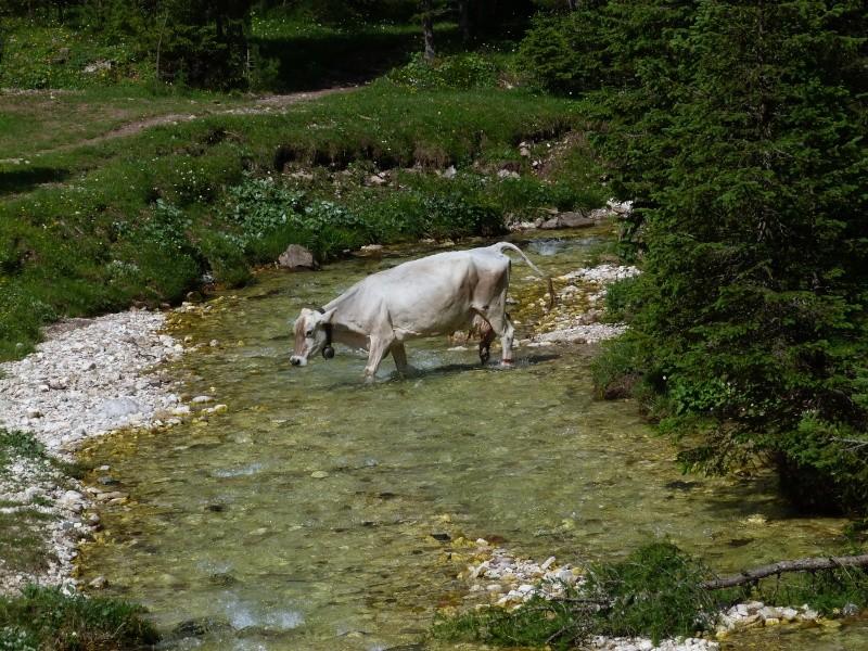 Du 13 au 19 juillet dans le Val di Fassa - Page 2 P1520113