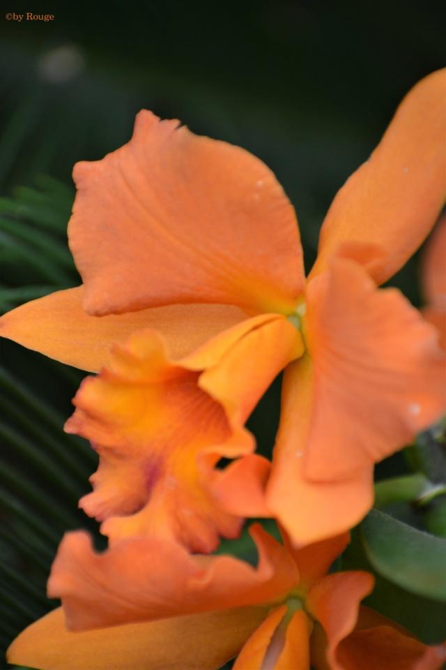 Orchideen-Ausstellungen aus aller Welt - Seite 3 Aftern10