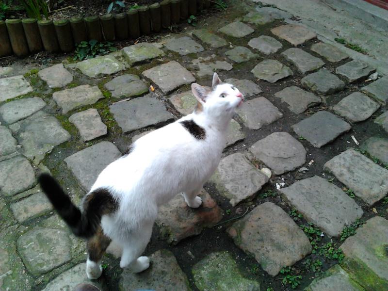 [Perdu] Sushi chat de 6 ans après avoir été adopté 2013-010