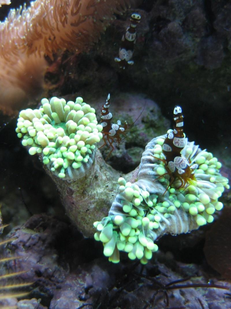Probleme avec Euphyllia Glabrescens Img_2411