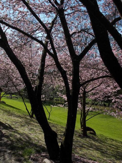 le parc oriental de maulévrier au printemps  Dscn7022
