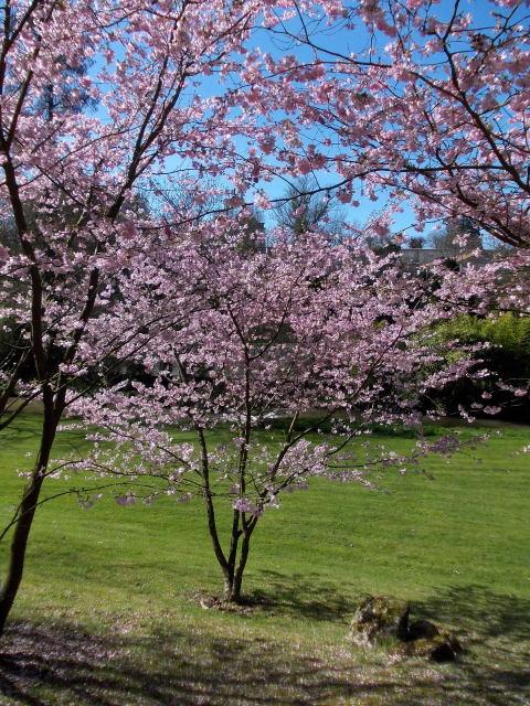 le parc oriental de maulévrier au printemps  Dscn7023