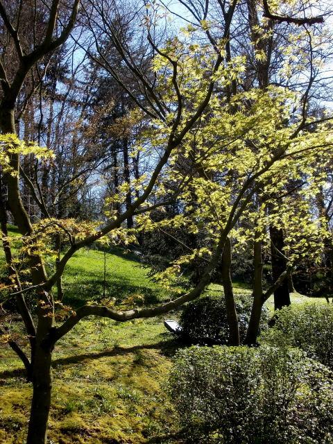 le parc oriental de maulévrier au printemps  Dscn7024