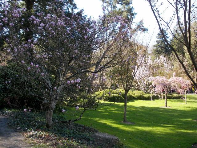le parc oriental de maulévrier au printemps  Dscn7026
