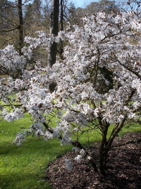 le parc oriental de maulévrier au printemps  Dscn7028