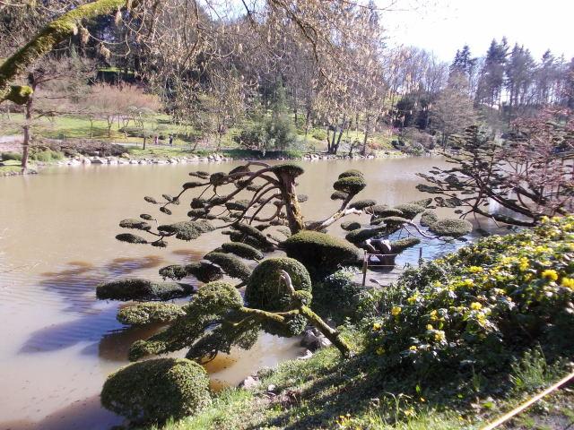 le parc oriental de maulévrier au printemps  Dscn7035
