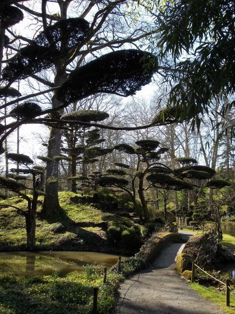 le parc oriental de maulévrier au printemps  Dscn7113