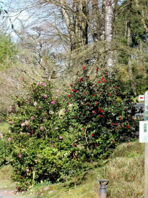 le parc oriental de maulévrier au printemps  Dscn7114
