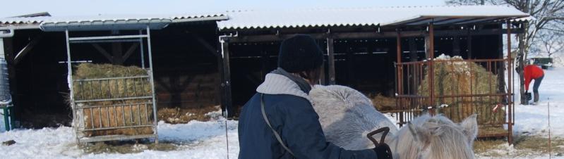 Abrit de vos chevaux 2010-110