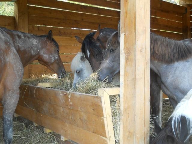 Abris pour chevaux Dscn0811