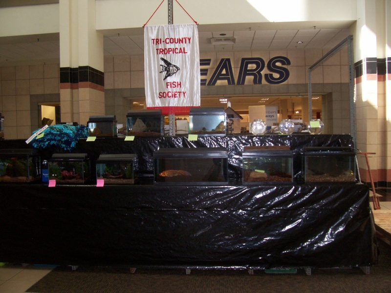 Peoria show at Northwoods mall 00510