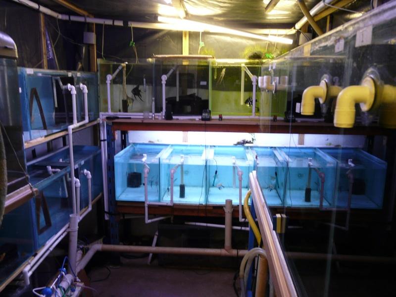 Tank  Sizes Fish_h19