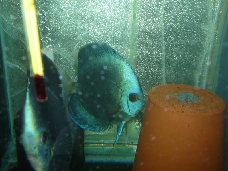 Tank  Sizes Fish_h20
