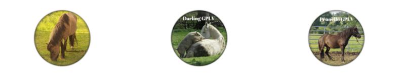 Les Magnets GPLV (épuisés)  Gplv_m10