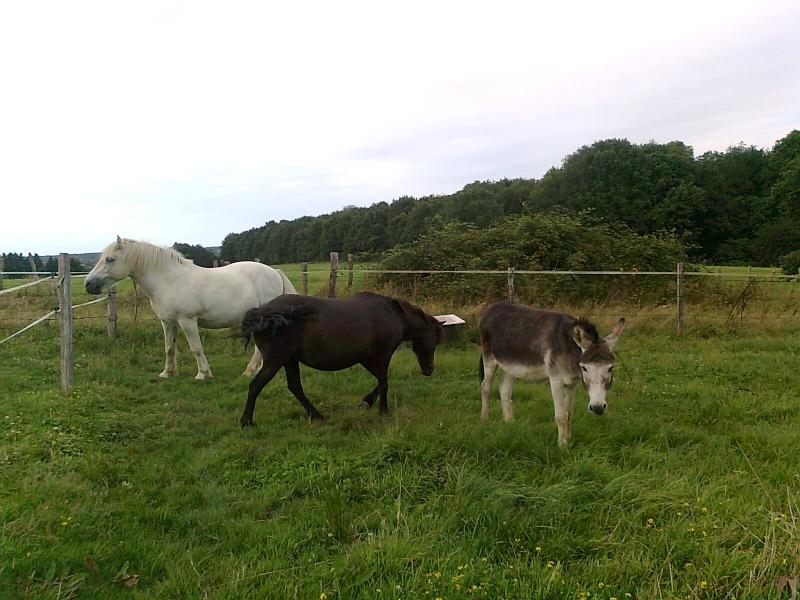 REGLISSE - ONC poney typée Shetland née en 2000 - adoptée en novembre 2013 par Solenn - Page 2 Photo111