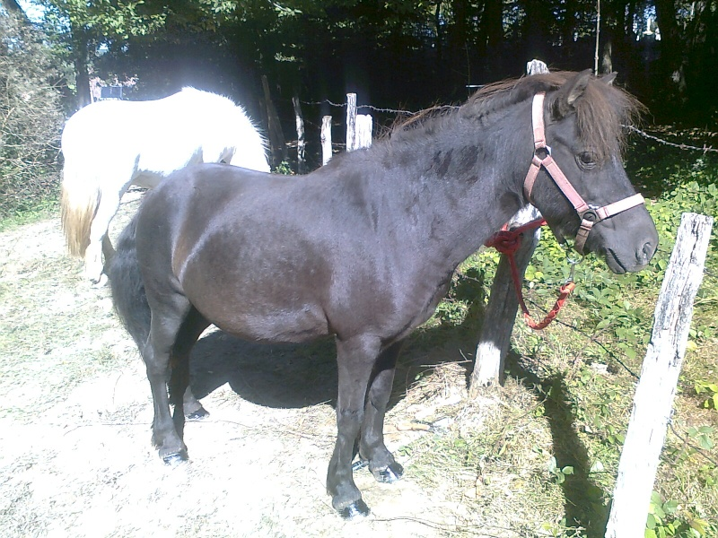REGLISSE - ONC poney typée Shetland née en 2000 - adoptée en novembre 2013 par Solenn - Page 2 Photo116