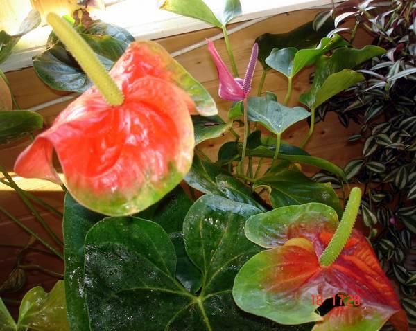 fleurs d'hiver.... Anthur10
