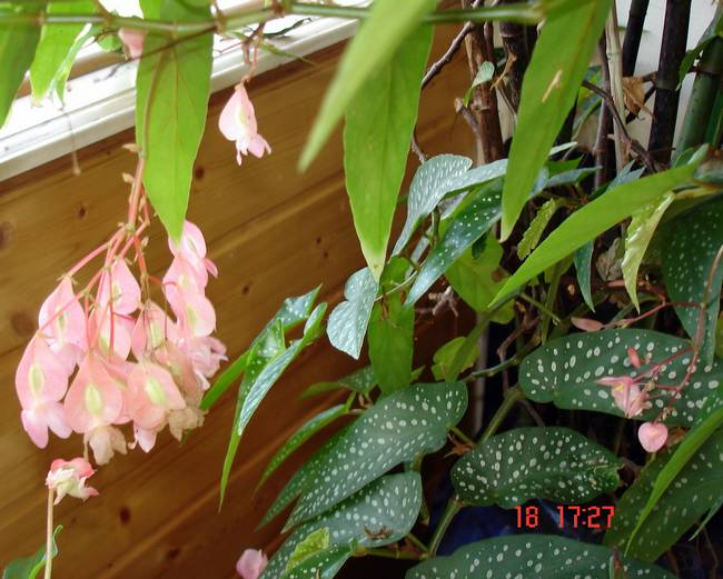 fleurs d'hiver.... Bagoni10