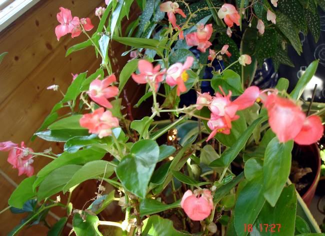 fleurs d'hiver.... Bagoni11