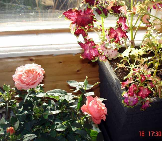 fleurs d'hiver.... Dsc05127