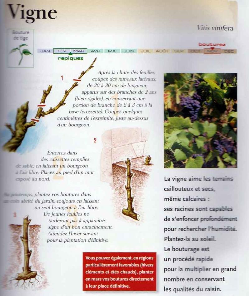 Ma vigne-framboise  grimpante - Page 3 Image_10