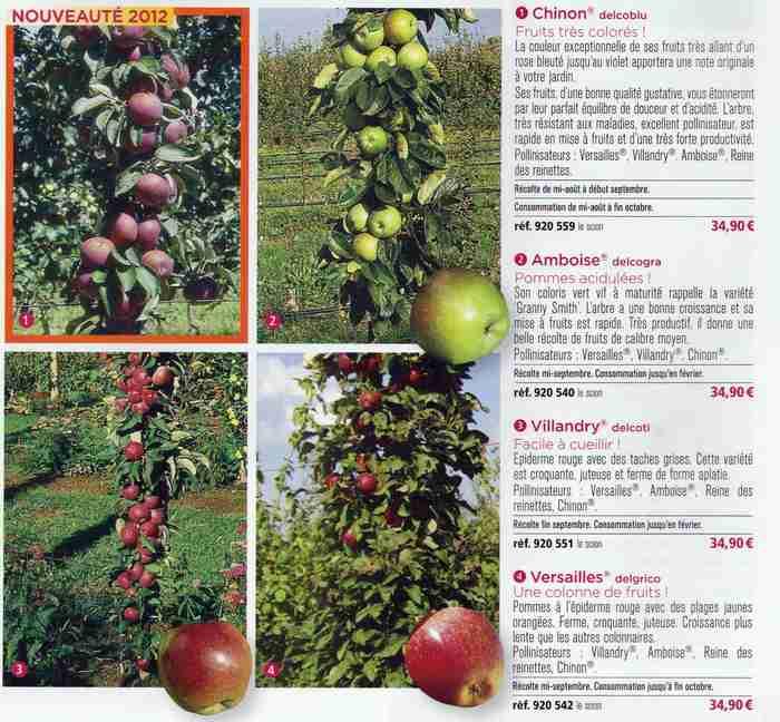 pommiers/poiriers palissés ou en colonne - Page 3 Pommie10