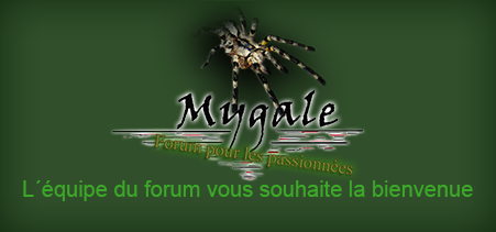 mygale Popup110