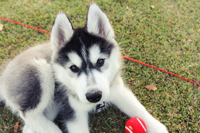 Little Bear Mishka~♥ (Updated 10/14/18) - Page 3 Img_0510