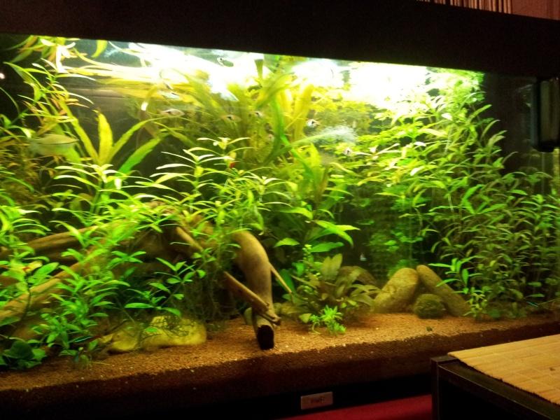 juwel rio 125 Litres 2013-010