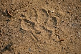 Big cat at Beechworth Images10