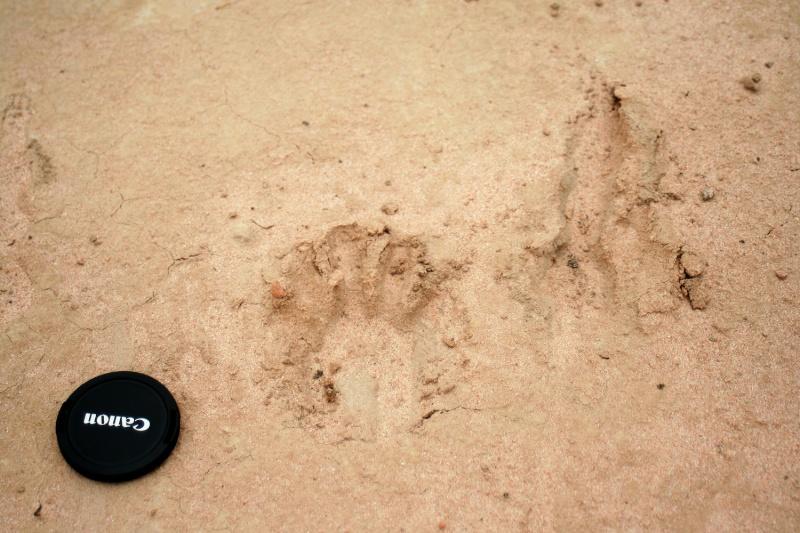 Big cat at Beechworth Img_9914