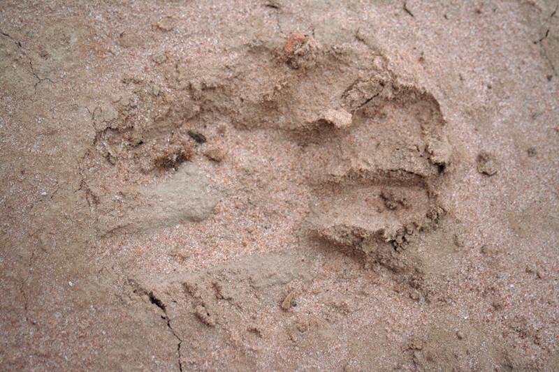 Big cat at Beechworth Img_9915
