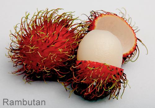 thai - Fruit Thai: Le goût exotique d'un paradis tropical Thai-f16