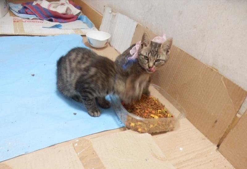 IRMA chaton femelle 10/06/2013 adoptée par jennifer  ( 85 ) P9280012