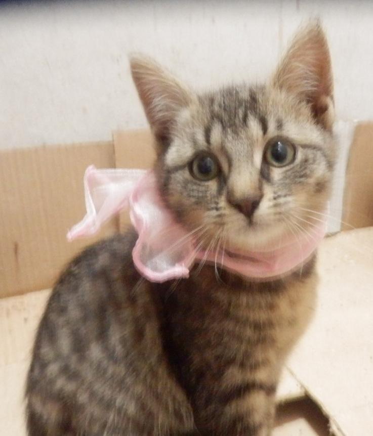 IRMA chaton femelle 10/06/2013 adoptée par jennifer  ( 85 ) P9280014