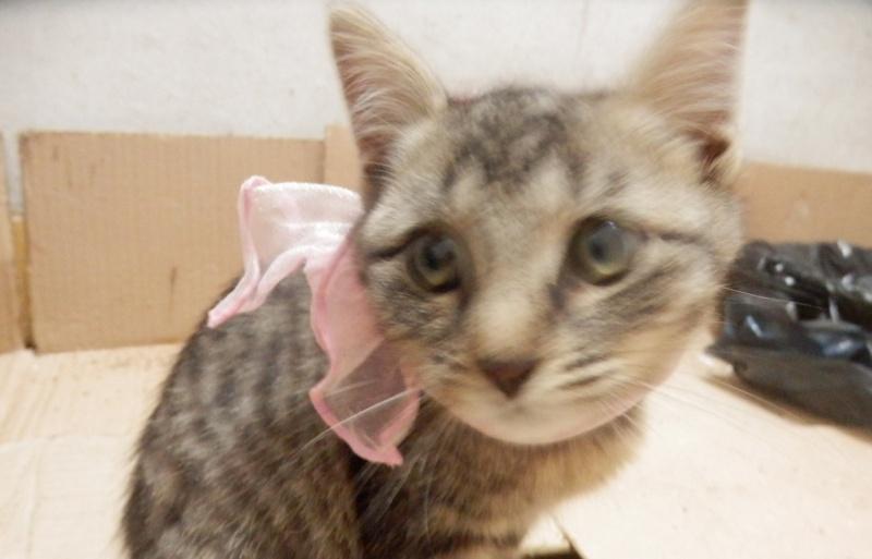 IRMA chaton femelle 10/06/2013 adoptée par jennifer  ( 85 ) P9280015