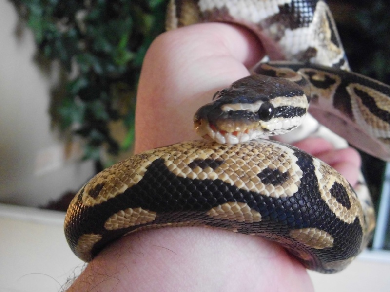 mon python Cimg0322