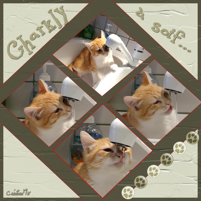 Mon petit Charly est arrivé - Page 3 Charly10
