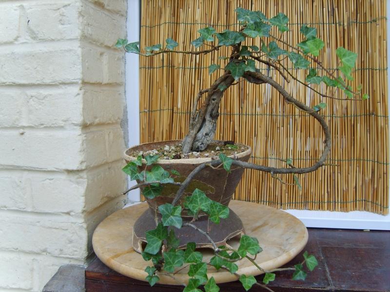 mes bonsaïs - Page 2 11sept23