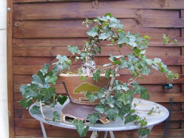 mes bonsaïs - Page 2 22jan210