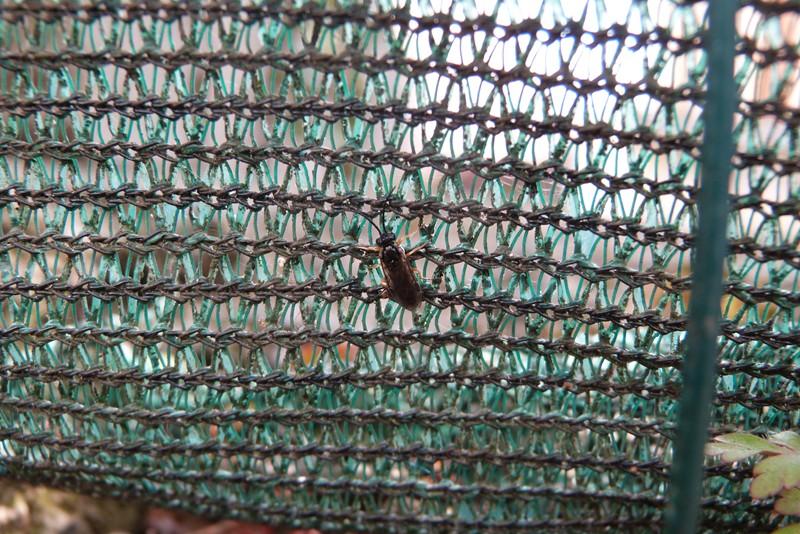 Quel est cet insecte ? P1020012
