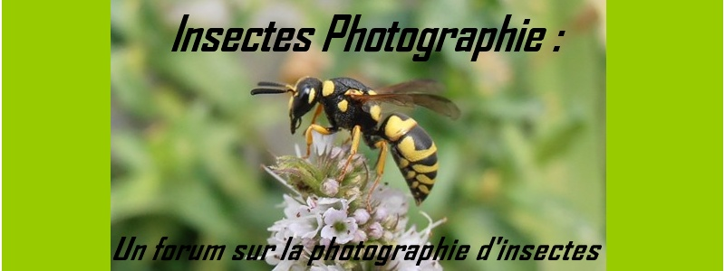 Insecte-Photographie