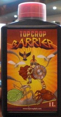 TOP CROP Topp_c10