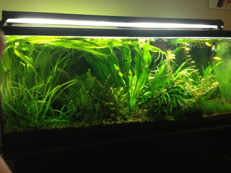 My 55 Gallon High Tech - Tons of Pictures! - Page 2 1110