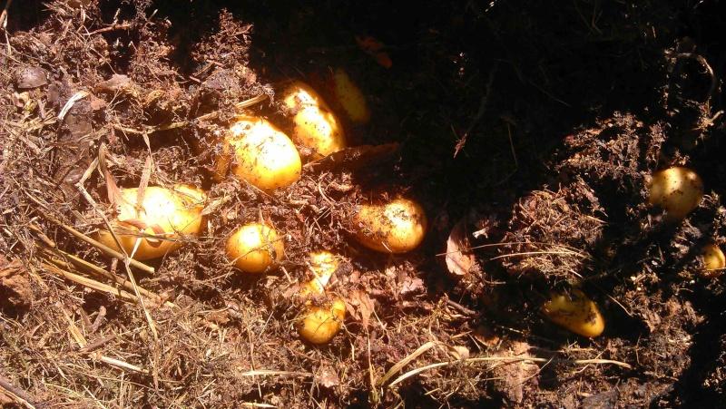 Des petites pommes de terre 1a10