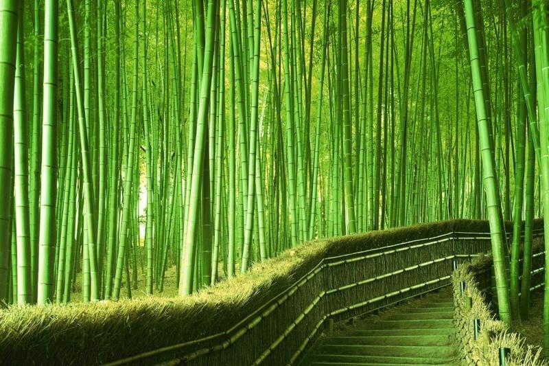 Bambou. Glups10