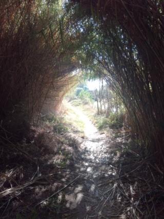 De la Riviera à la Gironde [5 au 30 septembre] saison 13 •B - Page 4 Img_2016